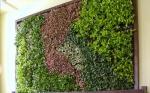 Проектиране на Интериорни вертикални градини