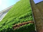 Фасада от растения