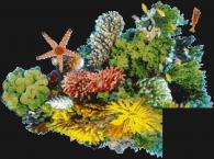 Мозайка за басейн - картина Морско дъно